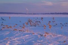 Reed на заходе солнца Стоковые Изображения