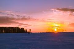 Reed на заходе солнца Стоковое фото RF