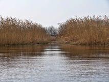 Reed отражая в озере в осени стоковое изображение rf