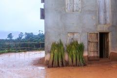 Reed стоя против снаружи дома в африканском moun стоковое фото rf
