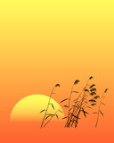 Reed. And sunset, picture in the eastern style Royalty Free Stock Photo