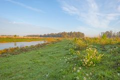 Free Reed Along The Shore Of A Pond In A Natural Park At Sunrise At Fall Royalty Free Stock Photo - 130758035