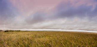Reed an Alvisio-Jachthafen Stockbilder