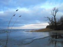 Reed, arbres et Curonian crachent en glace d'hiver, Lithuanie Image libre de droits