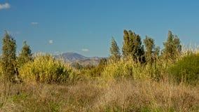 Reed, arbustes et arbres dans la réserve naturelle d'estuaire de rivière de Guadalhorce avec des montagnes de Malaga à l'arrière- photographie stock