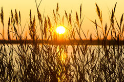 Reed au coucher du soleil Photo libre de droits