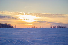 Reed au coucher du soleil Images stock