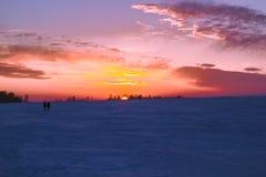 Reed au coucher du soleil Image stock