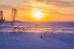 Reed au coucher du soleil Photo libre de droits