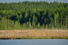 Reed auf dem See Stockfotos
