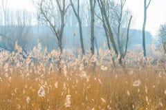 Reed auf einem Gebiet entlang der Rand von einem See Stockfotos