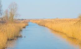 Reed auf einem Gebiet entlang der Rand von einem See Lizenzfreie Stockfotografie