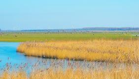 Reed auf einem Gebiet entlang einem gefrorenen See bei Sonnenaufgang Lizenzfreie Stockfotos