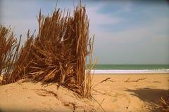 Reed auf einem leeren Strand Stockfotos