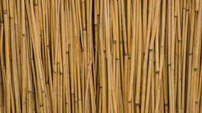 Reed Background Stock Photos