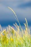 Reed background Stock Image