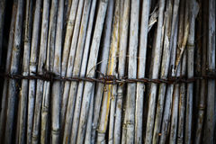 Reed and barbed wire Stock Photography
