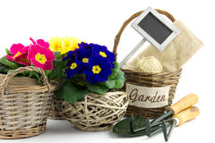 Reed baskets, garden utensils and primroses Stock Images