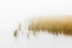 Reed bed in fogg Royalty Free Stock Photography