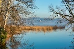 The reed bed on the lake of Varese with a hill in the background Royalty Free Stock Photography