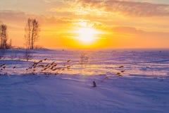 Reed bei Sonnenuntergang Lizenzfreies Stockfoto