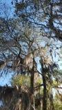Reed Bingham State-Park Stockbilder