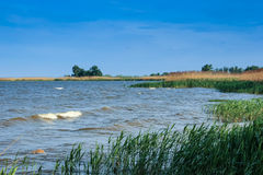 Reed and blue river Stock Photography