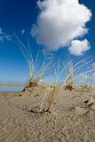 Reed and blue sky. At Spieckeroog Island, Germany Stock Photos