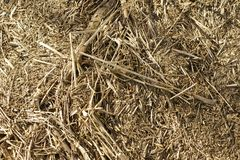 Reed and Brushwood Royalty Free Stock Photography