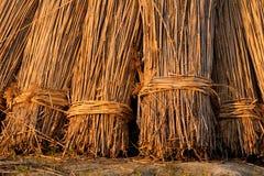 Reed Bundles Stock Image