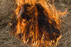 Reed Cane Burning Giethoorn Holland stock afbeeldingen