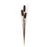 Reed cane grass Stock Photo