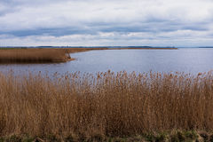Reed chez Hiddensee Bodden/mer baltique dans Mecklenburg-Vorpommern, Ruegen, Allemagne image stock
