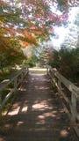 Reed City Michigan Foot Bridge i höst arkivbilder