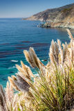 Reed with clear blue sea Stock Photography