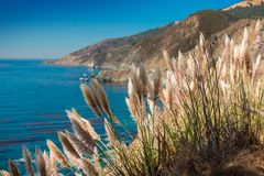 Reed with clear blue sea Royalty Free Stock Photo
