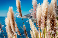 Reed with clear blue sea Stock Photos