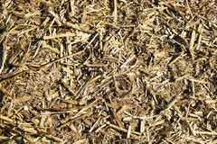 Reed close up Stock Images