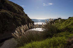 Reed by the coastal beach with backlit Royalty Free Stock Photos