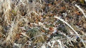 Reed con los cristales de la helada de la escarcha en invierno almacen de video