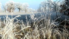 Reed con los cristales de la helada de la escarcha en invierno metrajes