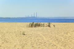Reed contre le sable, la rivière et l'usine Photo libre de droits