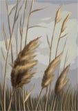 Reed contro l'illustrazione del cielo Fotografia Stock