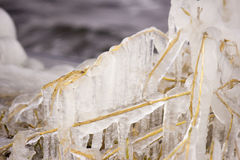 Reed. Covered with ice Royalty Free Stock Images