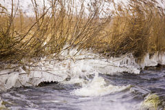 Reed. Covered with ice Stock Images