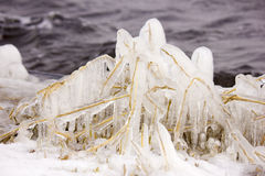 Reed. Covered with ice Royalty Free Stock Image