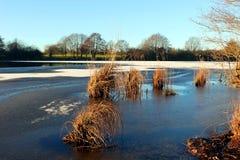 Reed dans le lac Einfelder voient Image libre de droits