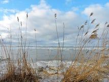 Reed e Curonian cospem no gelo do inverno, Lituânia imagens de stock royalty free