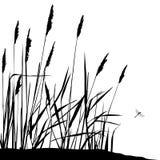 Reed e libellula di volo - illustrazione di vettore royalty illustrazione gratis