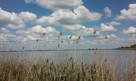 Reed ed il lago fotografia stock